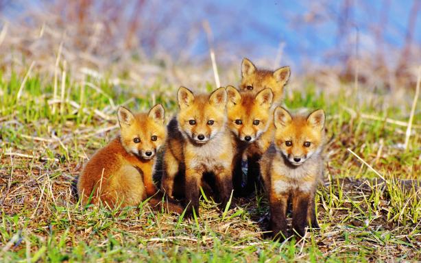 Cute Animals Desktop Wallpapers