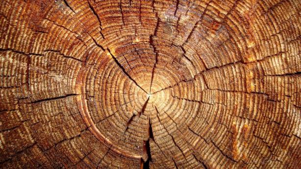 Tree Wood Desktop Wallpapers
