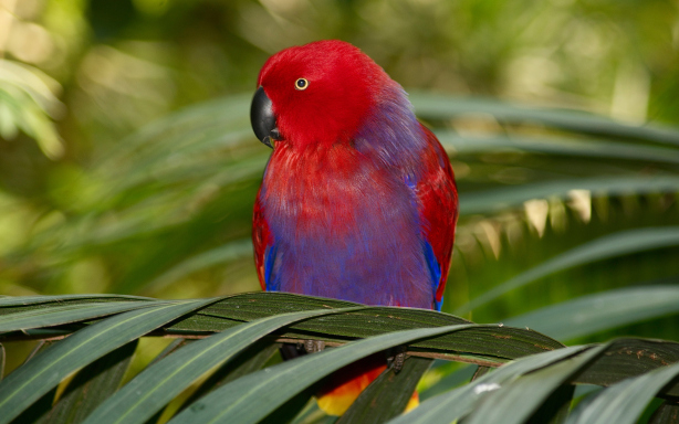 Colorful Parrot Desktop Wallpapers